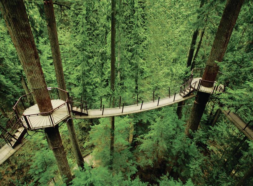 Treetops-Adventure
